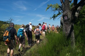 Wanderer auf der Rheingoldschleife am Ginsterstück