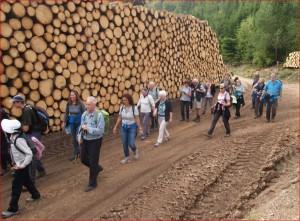 Gewaltige Holzstöße künden vom Ausmaß der Orkanschäden.