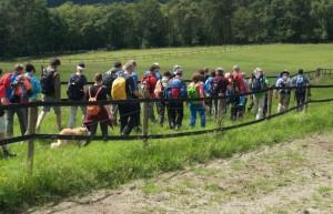 Wandern durch Wispertaunuswiesen