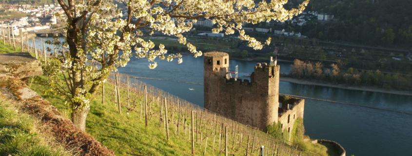 Blick auf Ruine Ehrenfels und ins Binger Loch